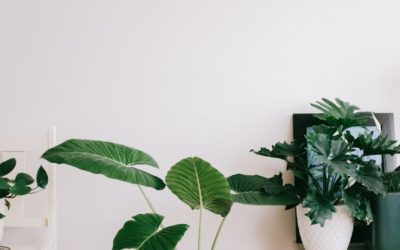 Purifier l'air par les plantes !